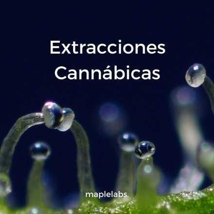 Seminario: Extracciones Cannábicas
