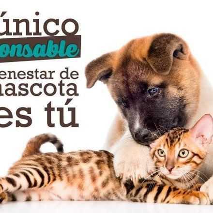 ¿Eres un dueño de mascota responsable? Puntos importantes de la tenencia responsable de mascotas que no sabías.
