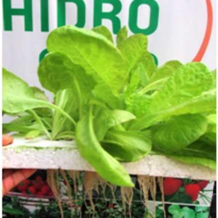 Charla Cultivo Hidróponico