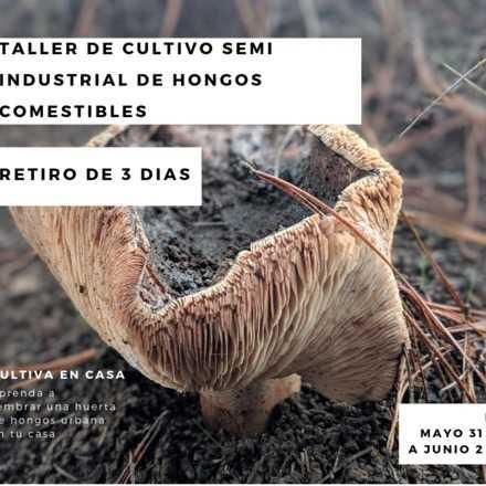 Taller de cultivo semi industrial de hongos comestibles