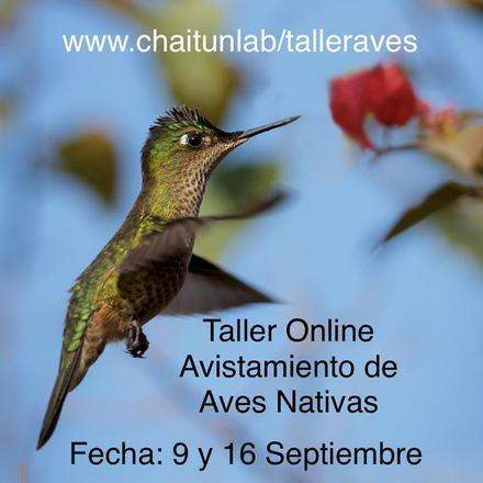 Taller online de Avistamiento de Aves Nativas (2 sesiones) 9 y 16 de septiembre 2020