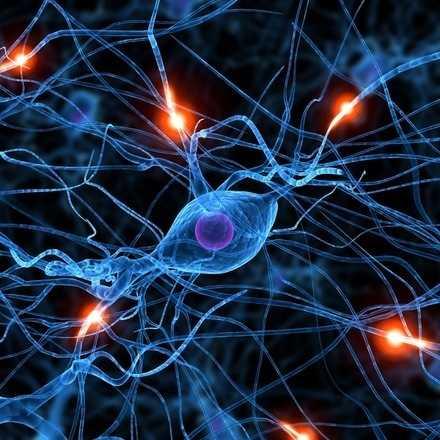 Taller Nuevas Aproximaciones a la Cognición
