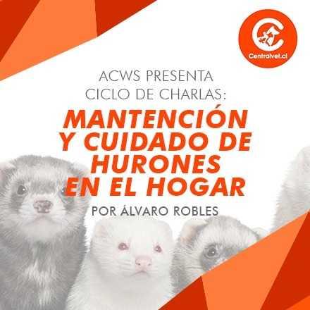Ciclo de charlas: Tenencia responsable de hurones como mascota