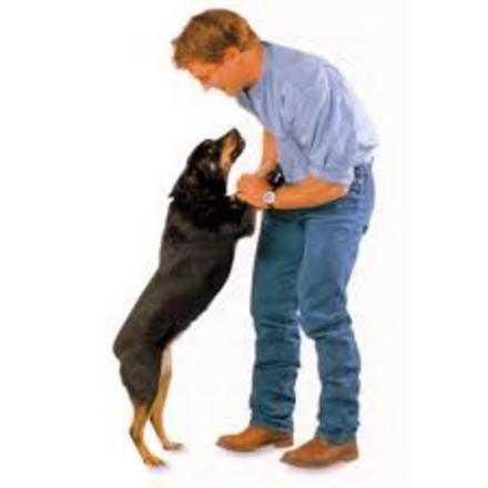 Taller Gratuito Mi Perro Juega y Aprende, Evita el estrés y mejora la comunicación con tu perro.