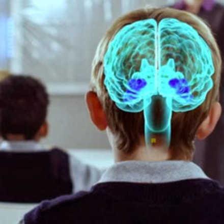 Curso Neurociencia Práctica para Docentes