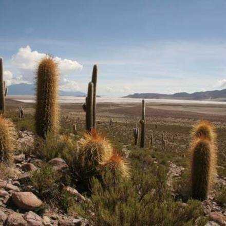 Charla Gratuita de los Cactus del Extremo Norte de Chile 17 Nov