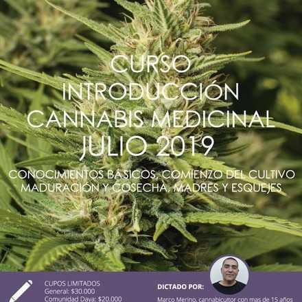 Curso Introductorio al Cannabis Medicinal de Julio