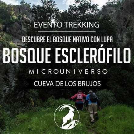 Bosque Esclerófilo, su microuniverso - Cueva de los Brujos