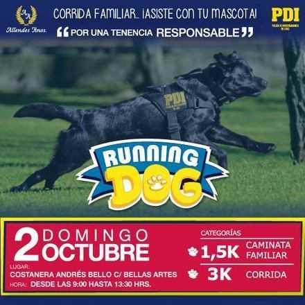 Running Dog 2016