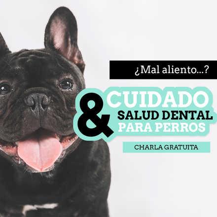 Charla Cuidado & Salud Dental para perros