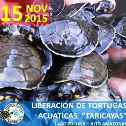 LIBERACION DE TORTUGAS ACUATICAS