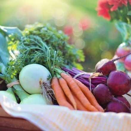 Emprendedores Interesados en Feria de Alimentos Saludables