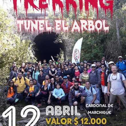 Trekking Túnel El Árbol