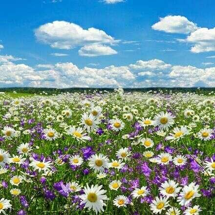 Dulce Primavera