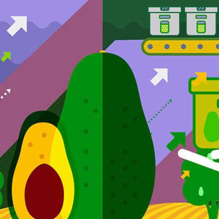 2do Curso Aguacate Hass Colombia: Manejo del cultivo para fruta de exportación