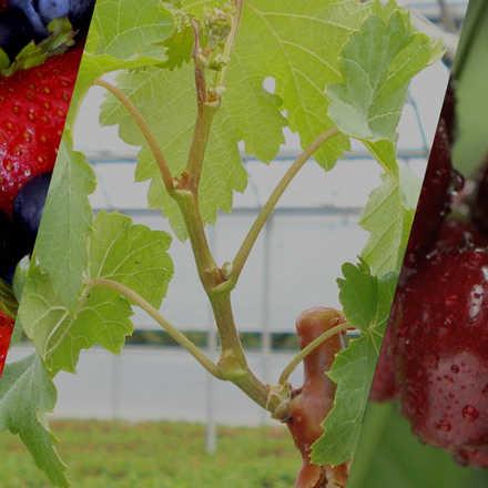 """2º Seminario """"Nuevas Especies y Variedades para la Fruticultura del Perú"""""""