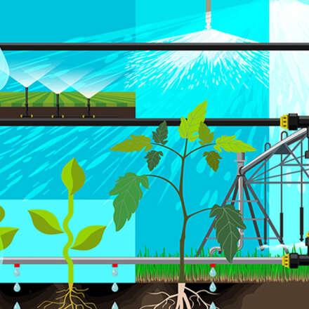 """Curso Internacional Aplicado de Relaciones Hídricas: """"Interacción suelo, agua y planta"""""""